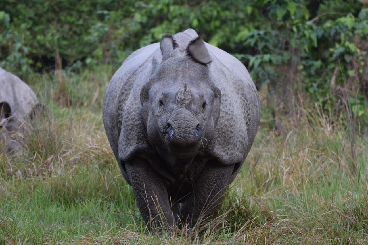 rhino-1-1.jpg