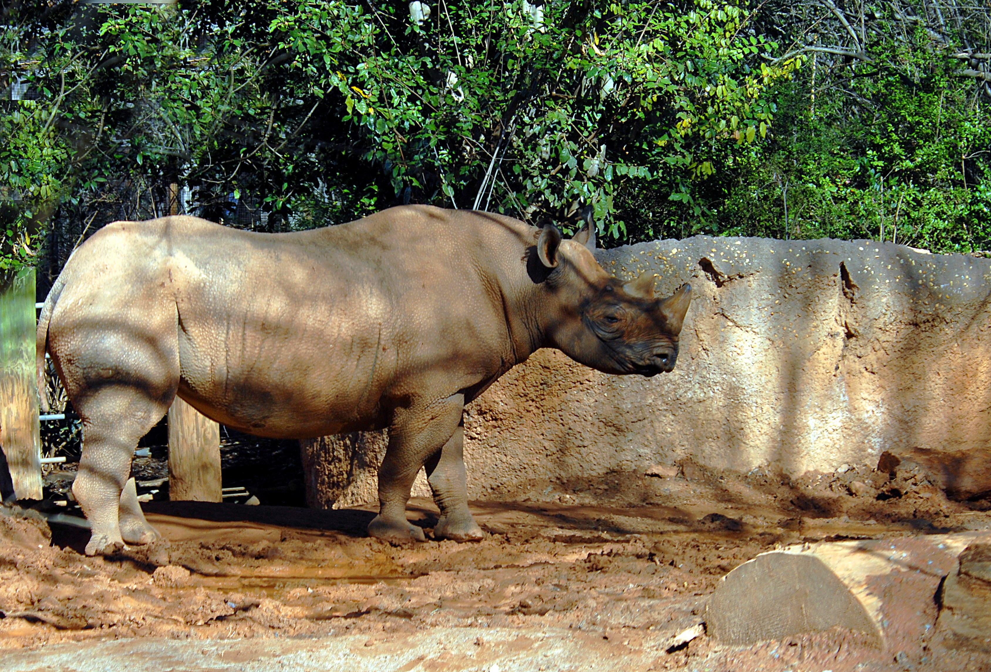 rhino-1620122-1.jpg
