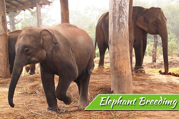 elephant-breeding-center-1.jpg