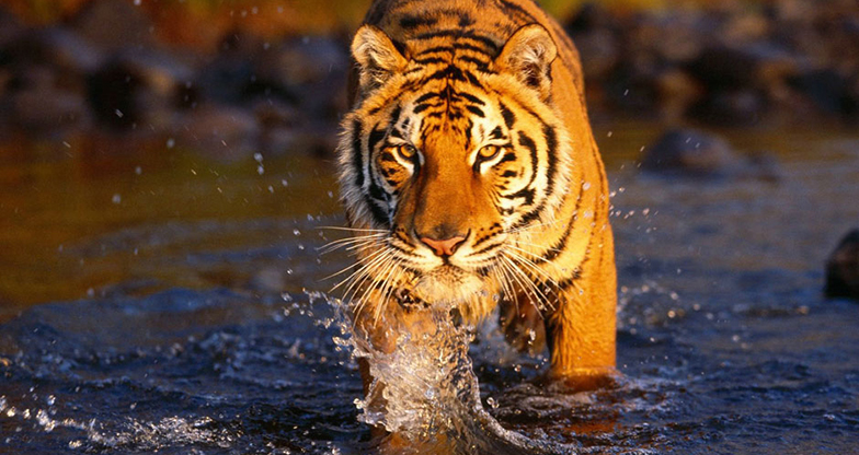 Tiger Tops Safari (Chitwan National Park & Bardia National Park) - 4 Days
